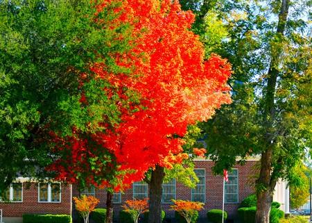美しいオレンジ色の旗が付いている教会を飾る葉.