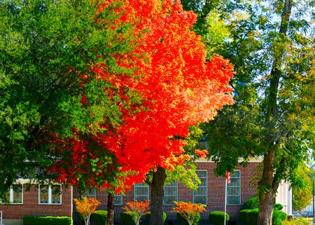 adorning: Beautiful orange colored leaves adorning a church with a flag.