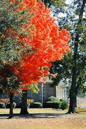 オレンジ美容で美しく飾られて今年の秋の教会