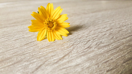 Yellow button flower on table