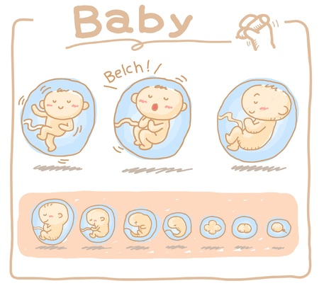 belch: Baby inside womb hand drawn