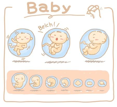 utero: Bambino all'interno dell'utero disegnata a mano