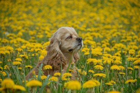 goodly: Puppy and flowers Stock Photo