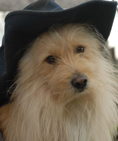 Puppy with hat photo