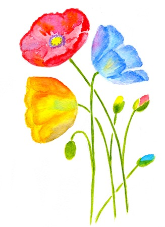 isolated: Three poppy flower isolated on white background, watercolor  illustration and paper texture