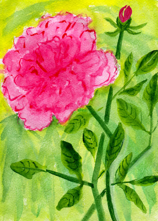 freshness: Red peony with buds and leaves, watercolor illustration and paper texture