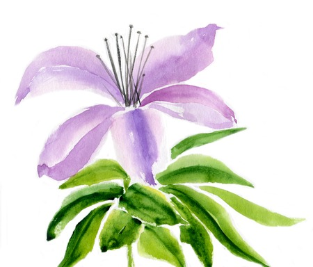water lilly: Lilac lily flower with leaves Isolated on white background, watercolor illustration and  paper texture