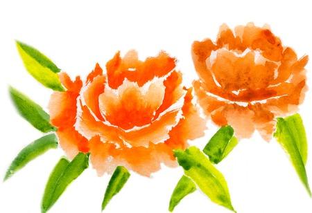Two orange peony with leaves isolated on a white background, watercolor illustration and  paper texture