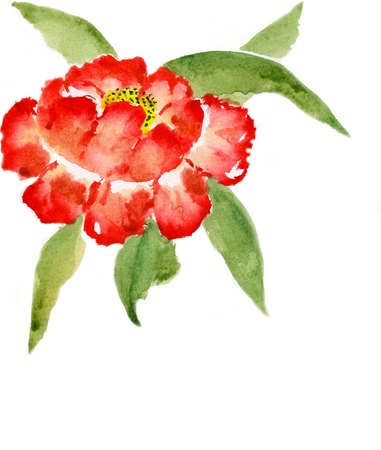 nature one painted: red peony with leaves isolated on a white background,  watercolor  illustration and paper texture