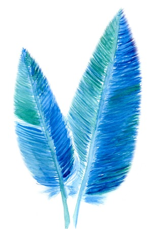 bird feathers: Two bird feathers isolated on white background, watercolor illustration and  paper texture