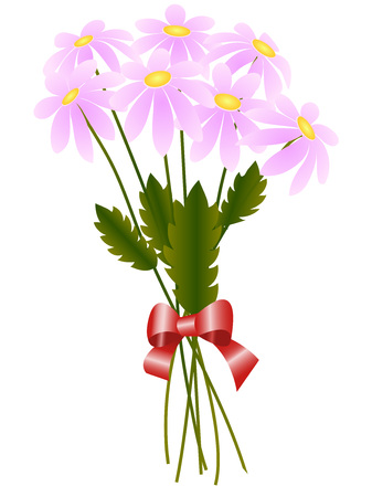 camomiles macro: Greeting card, bouquet of pink daisies isolated on a white background, vector illustration