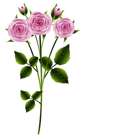 rosebuds: Greeting card, branch of pink roses with leaves isolated on a white background, vector illustration Illustration