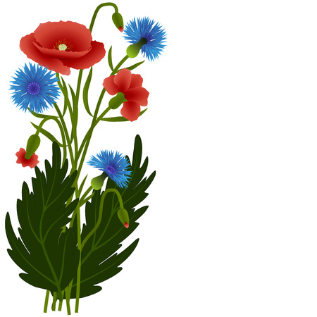 cornflowers: Bouquet poppies and cornflowers with leaves isolated on white background, illustration