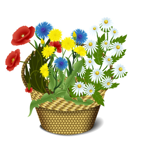 wattled: Greeting card, wattled basket with poppies, daisies, cornflowers and dandelions isolated on a white background, vector illustration