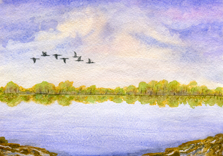 migratory birds: Landscape: cloudy sky, lake, forest on the horizon and a flock of migratory birds. Hand painted watercolor illustration and paper texture