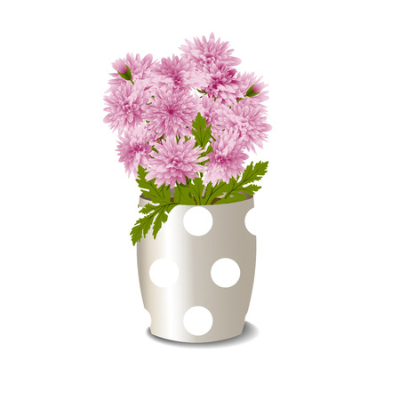 Bush of pink chrysanthemums in a flowerpot isolated on white background