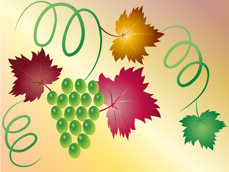 viticulture: Branch of green grapes with colorful leaves and curls Illustration