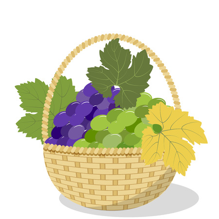 Bunches of blue and green grapes with leaves in a wicker basket isolated on white background, vector illustration