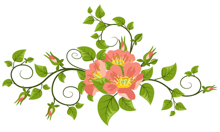 Dog-rose flowers with leaves, buds and curls, isolated on white background.