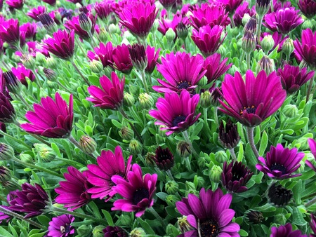 Flowers On the picture are colorfully represented the beautiful flowers.Wherever flowers are always pleasing and lift the mood of any person.