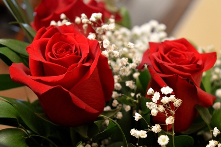 Beautiful red roses. A combination of beauty and subtle naturalness