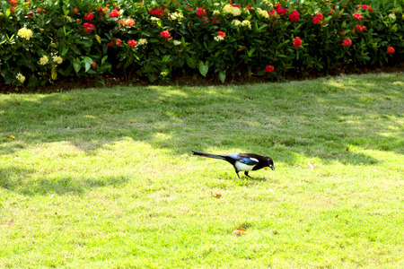 the bird in the park photo