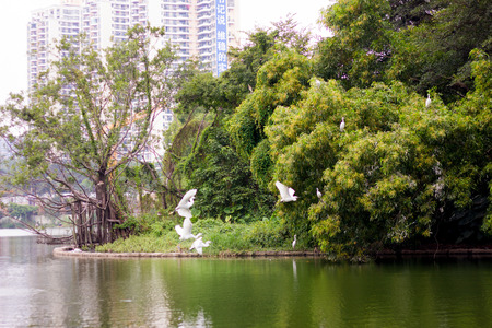 Egrets flying in a green forest