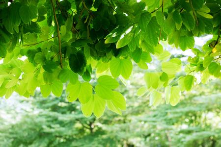 environmental science: green leaves