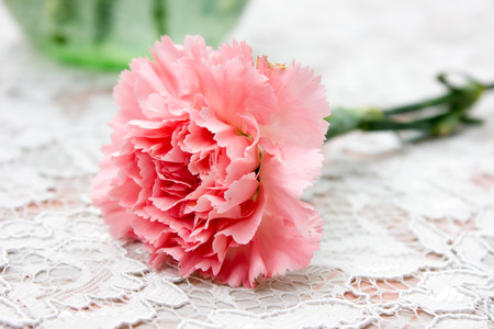 gillyflower: The pink carnation background material Stock Photo
