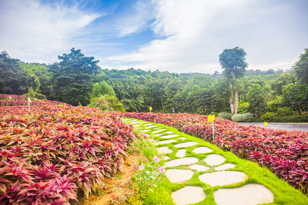 the beautiful landscape in the nanning of china Stock Photo
