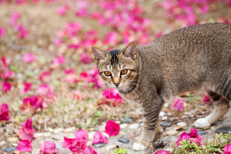 the cute spotted cat in the garden