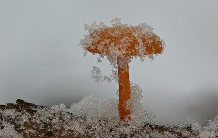 Beautiful wild forest mushroom