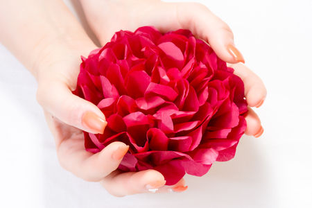 Beautiful red petal in womans hands with nail art isolated on white background Stock Photo