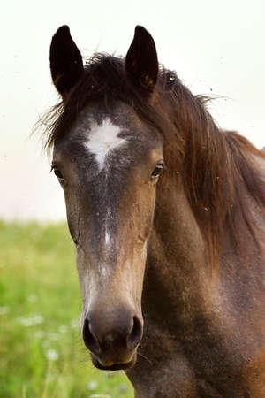 a closeup photo of a horse Stock Photo