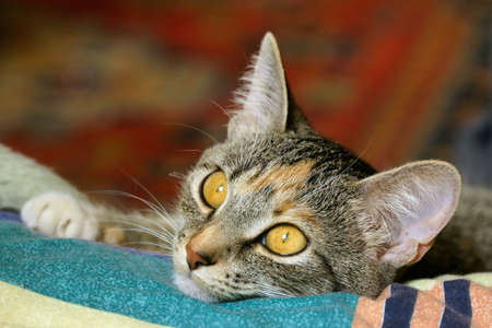 a closeup photo of a cat with golden eye