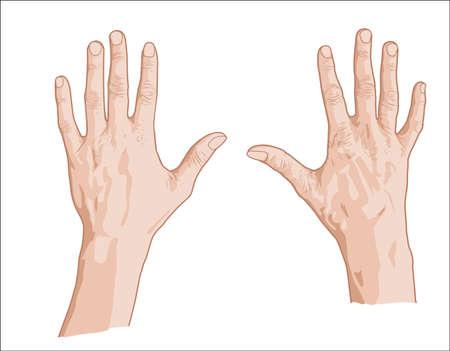 両手の指先をスケッチします。