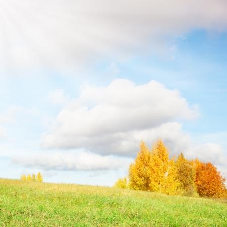 happynes: Fall Stock Photo