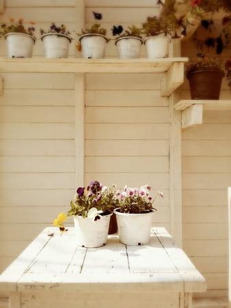 colour: Beautiful decoration on white colour wall Stock Photo