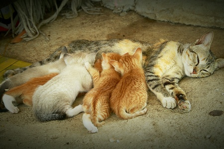 The family of cats were breastfed on the floor.