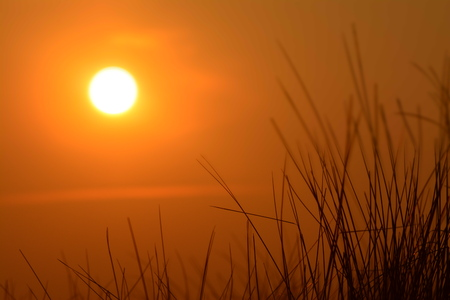 orange sunset: sunset grass