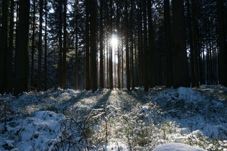 Impressions from a beautiful snowy winter wonderland forest with sun rays Standard-Bild