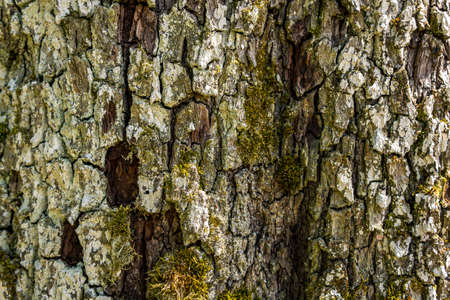 Close-up of an old tree with detailed, beautiful bark in Upper Swabia, Germany Stock Photo