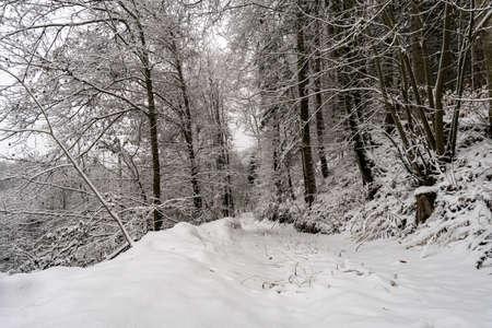 Winter hike in snow from Wilhelmsdorf on the Hoechsten near Illmensee on Lake Constance