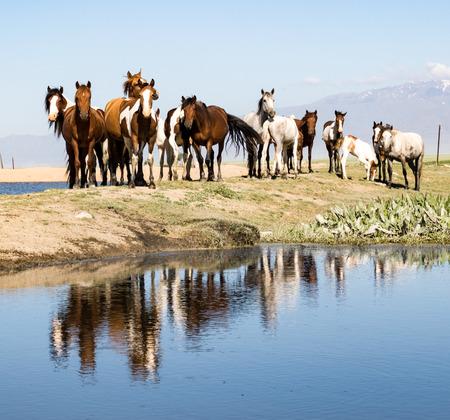Horses standing above pond in Kazakhstan
