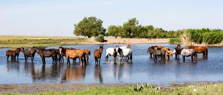 Horses standing in pond in Kazakhstan