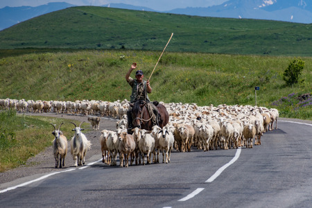 Goris, Armenia - June 16, 2017: Sheep herder with his flock on the road Editorial