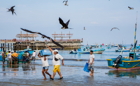 Puerto Lopez, Ecuador - Nov 27, 2011: Fishermen carry bins of fish to buyers, chased by birds looking for an easy meal