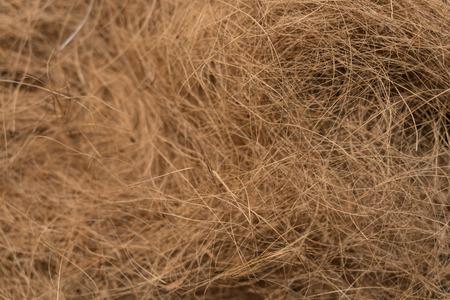Background texture of coconut husk fibers