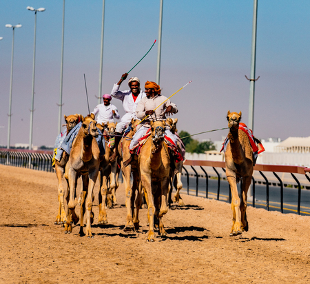 Dubai, UAE, Mar 21, 2018 - Men ride camels with others nearby to train for racing  in close quarters