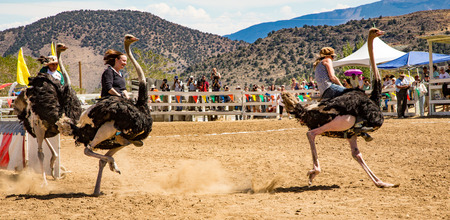 Reno, Nevada - Sept 8, 2012: Emu Races Editoriali